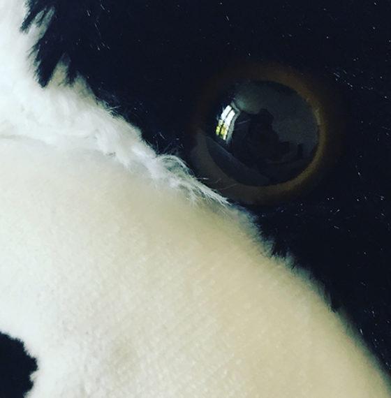 Le Panda qui te regarde.